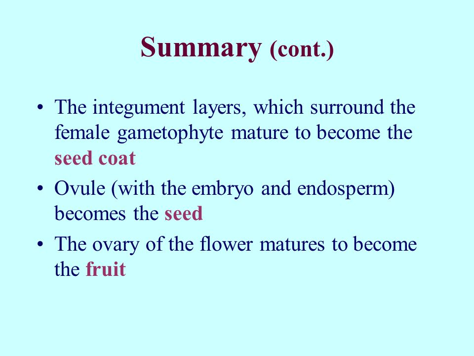 Summary (cont.) The integument layers, which surround the female gametophyte mature to become the seed coat Ovule (with the embryo and endosperm) becomes the seed The ovary of the flower matures to become the fruit
