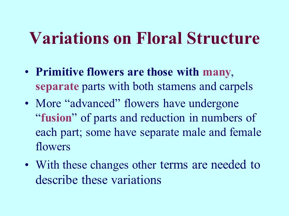 Variations on Floral Structure Primitive flowers are those with many, separate parts with both stamens and carpels More advanced flowers have undergonefusion of parts and reduction in numbers of each part; some have separate male and female flowers With these changes other terms are needed to describe these variations