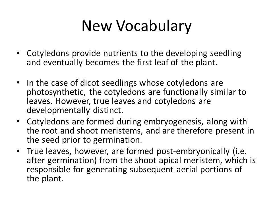 a - Seedcoat, b - Endosperm, c - Cotyledon, d - Embryo