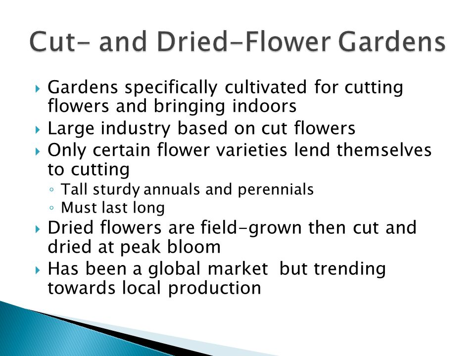 Gardens specifically cultivated for cutting flowers and bringing indoors Large industry based on cut flowers Only certain flower varieties lend themselves to cutting Tall sturdy annuals and perennials Must last long Dried flowers are field-grown then cut and dried at peak bloom Has been a global market but trending towards local production