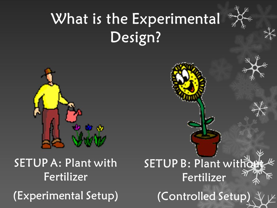 What is the Experimental Design? SETUP A: Plant with Fertilizer (Experimental Setup) SETUP B: Plant without Fertilizer (Controlled Setup)