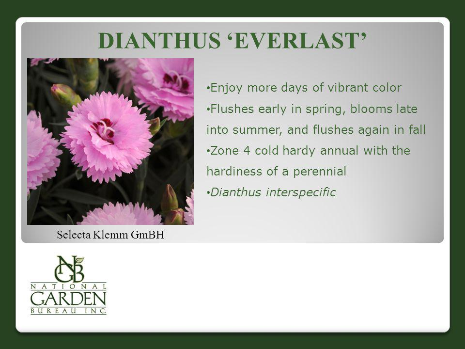 DIANTHUS EVERLAST Selecta Klemm GmBH Enjoy more days of vibrant color Flushes early in spring, blooms late into summer, and flushes again in fall Zone