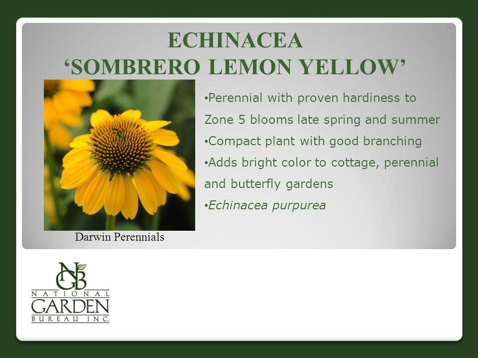 ECHINACEA SOMBRERO LEMON YELLOW Darwin Perennials Perennial with proven hardiness to Zone 5 blooms late spring and summer Compact plant with good bran