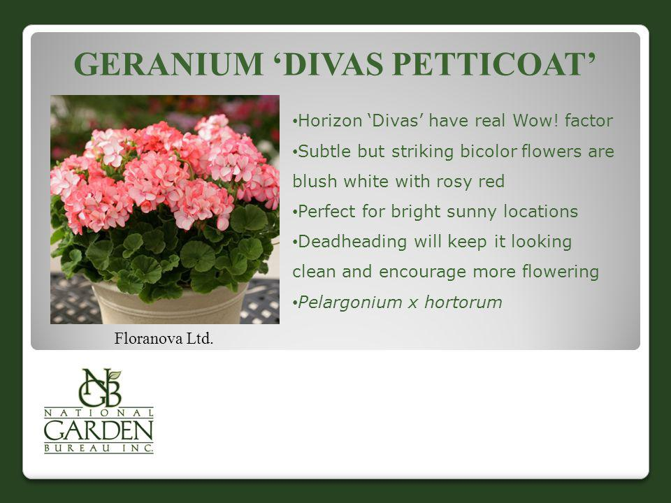GERANIUM DIVAS PETTICOAT Floranova Ltd. Horizon Divas have real Wow! factor Subtle but striking bicolor flowers are blush white with rosy red Perfect