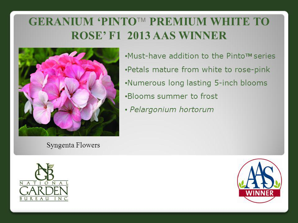 GERANIUM PINTO PREMIUM WHITE TO ROSE F1 2013 AAS WINNER Syngenta Flowers Must-have addition to the Pinto series Petals mature from white to rose-pink