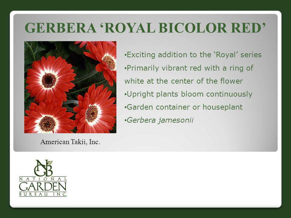 GERBERA ROYAL BICOLOR RED American Takii, Inc. Exciting addition to the Royal series Primarily vibrant red with a ring of white at the center of the f