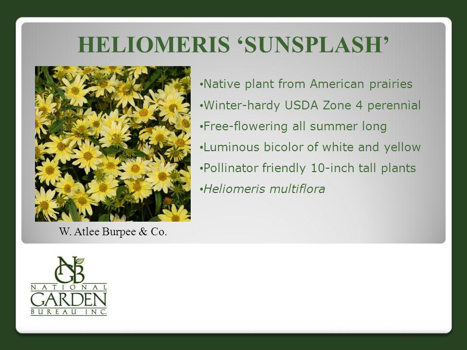 HELIOMERIS SUNSPLASH W. Atlee Burpee & Co. Native plant from American prairies Winter-hardy USDA Zone 4 perennial Free-flowering all summer long Lumin