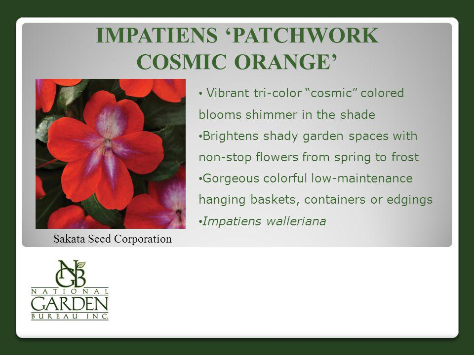 IMPATIENS PATCHWORK COSMIC ORANGE Sakata Seed Corporation Vibrant tri-color cosmic colored blooms shimmer in the shade Brightens shady garden spaces w