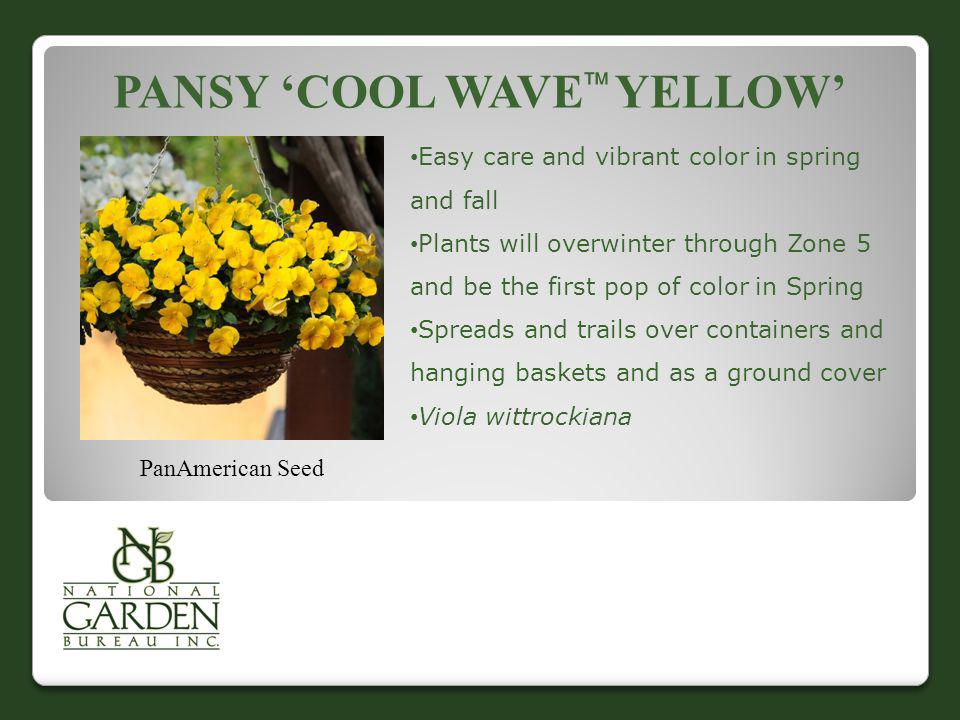PANSY COOL WAVE YELLOW PanAmerican Seed Easy care and vibrant color in spring and fall Plants will overwinter through Zone 5 and be the first pop of c