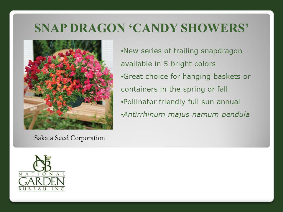 SNAP DRAGON CANDY SHOWERS Sakata Seed Corporation New series of trailing snapdragon available in 5 bright colors Great choice for hanging baskets or c