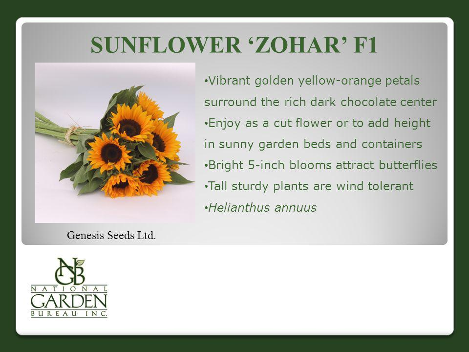 SUNFLOWER ZOHAR F1 Genesis Seeds Ltd. Vibrant golden yellow-orange petals surround the rich dark chocolate center Enjoy as a cut flower or to add heig