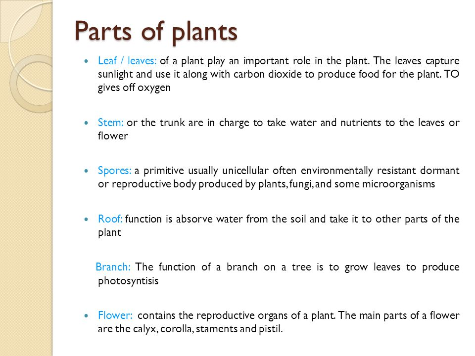 Parts of plants Leaf / leaves: of a plant play an important role in the plant. The leaves capture sunlight and use it along with carbon dioxide to pro
