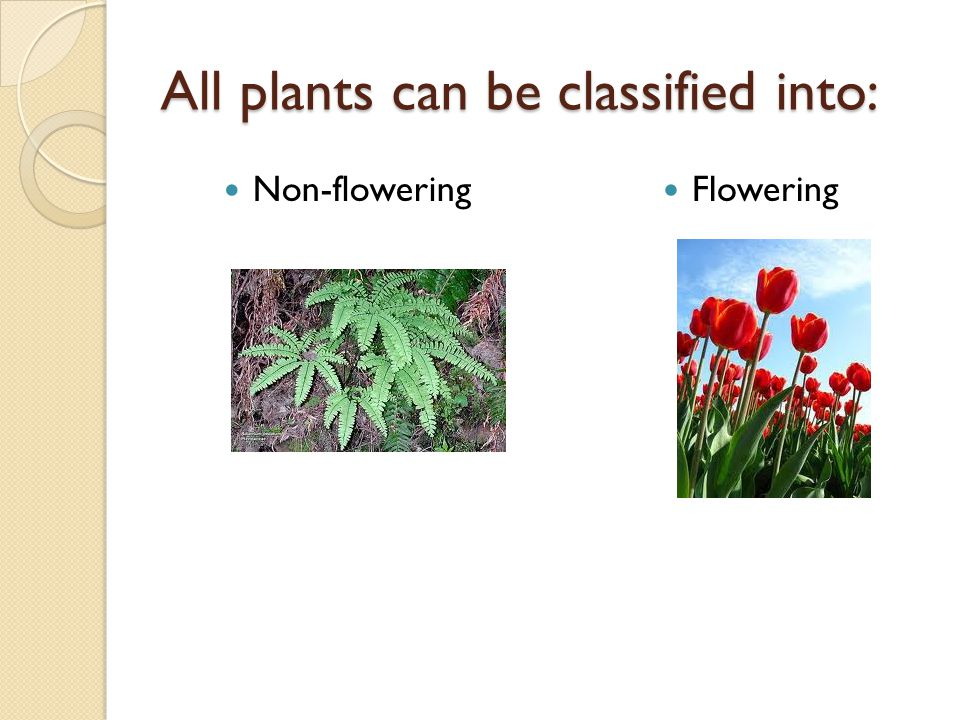All plants can be classified into: Non-flowering Flowering