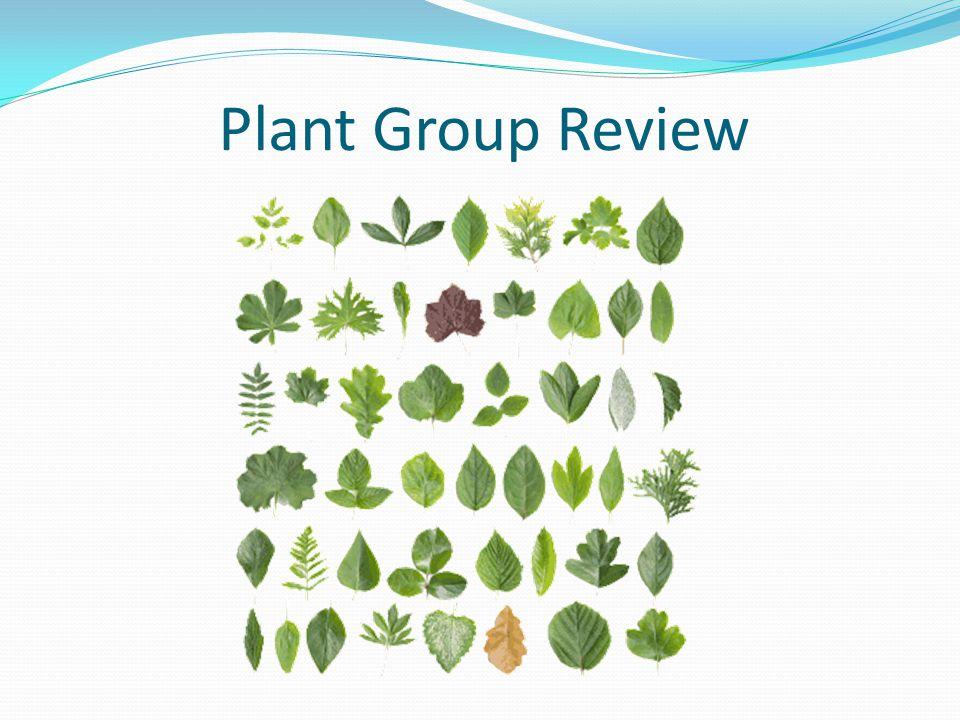 Conifers Plant Groups 1 Non-vascular 2 Vascular without seeds 3 Vascular with seeds no flowers 4 Vascular with seeds and flowers