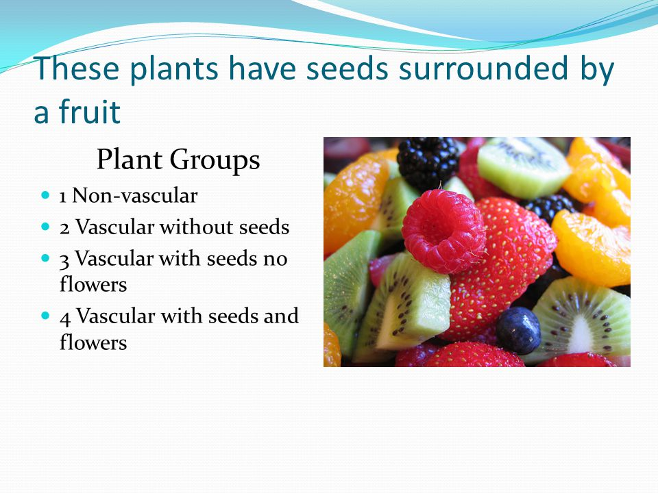 These plants have seeds surrounded by a fruit Plant Groups 1 Non-vascular 2 Vascular without seeds 3 Vascular with seeds no flowers 4 Vascular with seeds and flowers