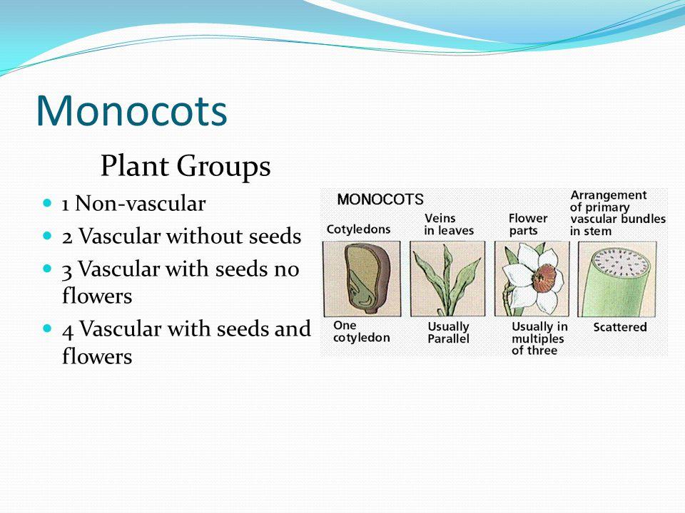 Pine tree Plant Groups 1 Non-vascular 2 Vascular without seeds 3 Vascular with seeds no flowers 4 Vascular with seeds and flowers