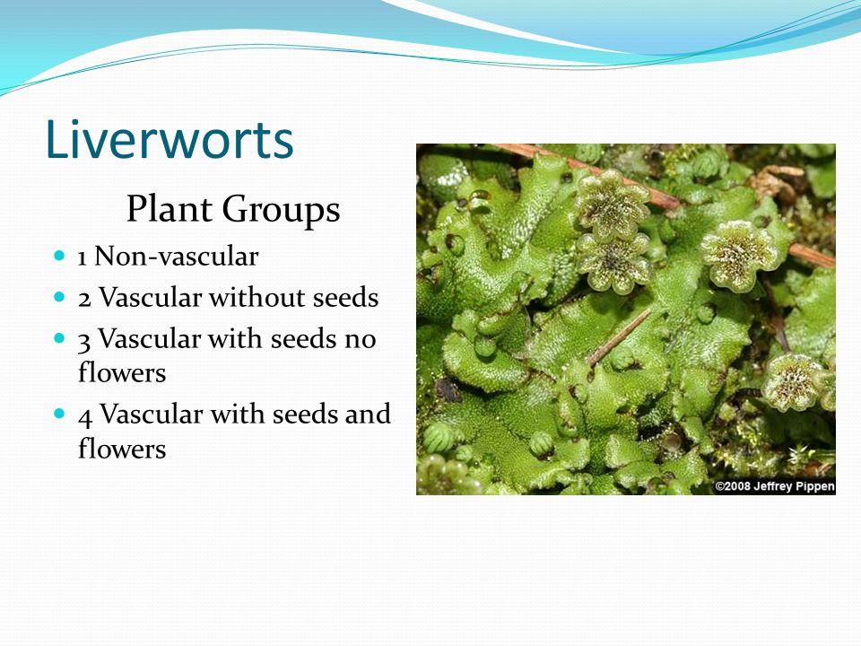 Rose bush Plant Groups 1 Non-vascular 2 Vascular without seeds 3 Vascular with seeds no flowers 4 Vascular with seeds and flowers