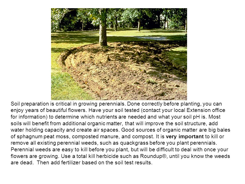 Soil preparation is critical in growing perennials.