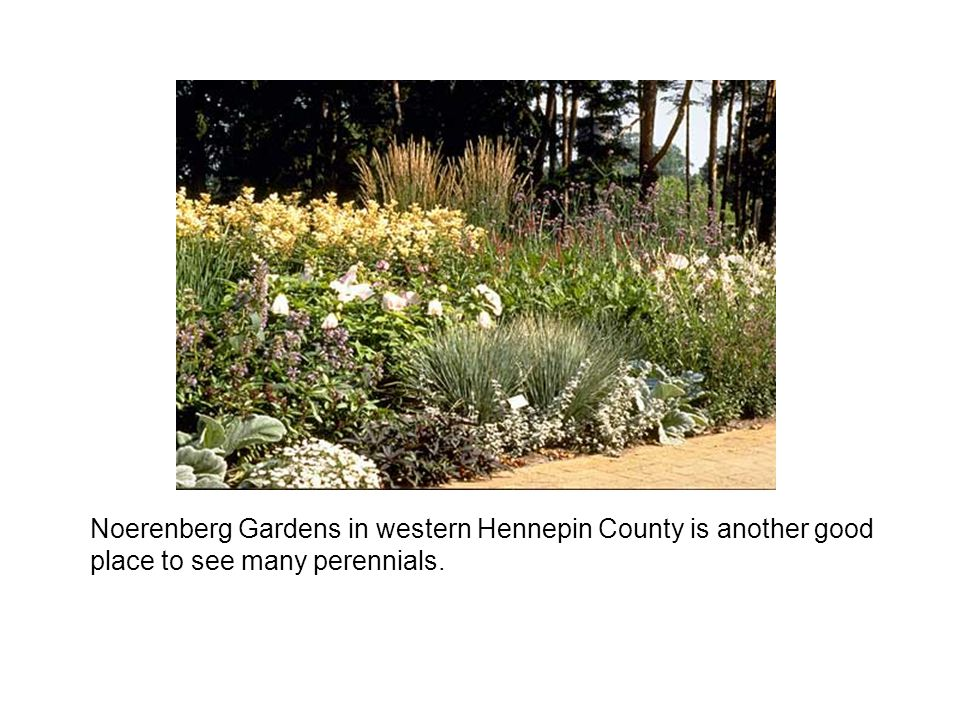 Noerenberg Gardens in western Hennepin County is another good place to see many perennials.