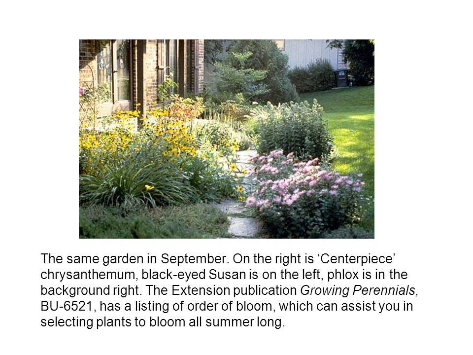 The same garden in September.