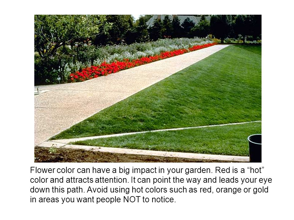 Flower color can have a big impact in your garden.