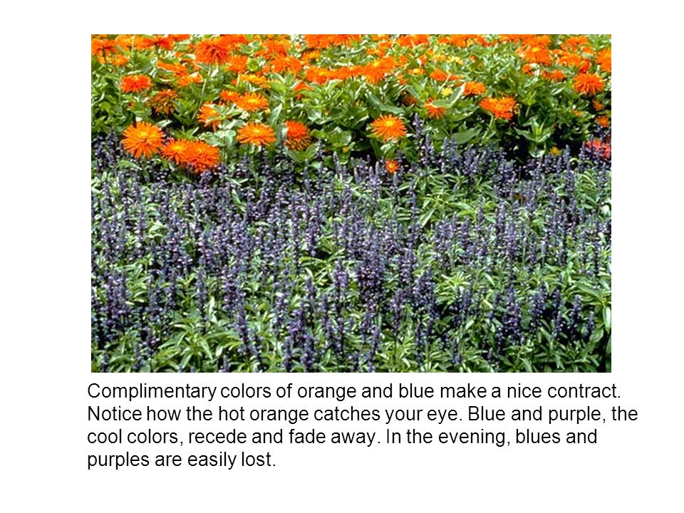 Complimentary colors of orange and blue make a nice contract.