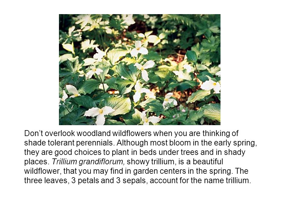 Dont overlook woodland wildflowers when you are thinking of shade tolerant perennials.