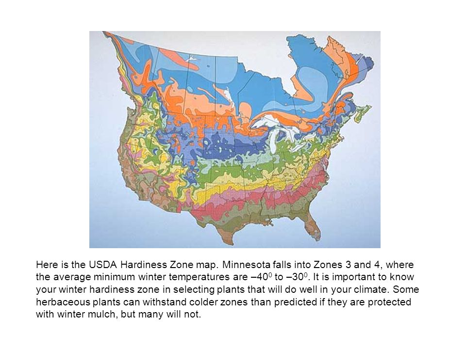 Here is the USDA Hardiness Zone map.
