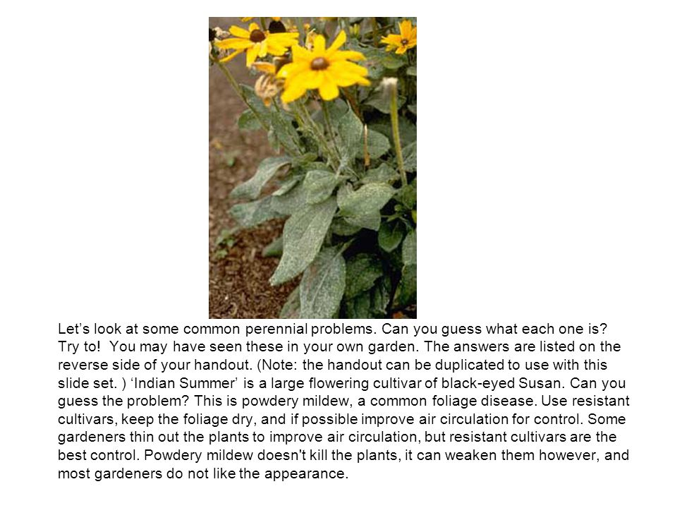 Lets look at some common perennial problems.Can you guess what each one is.