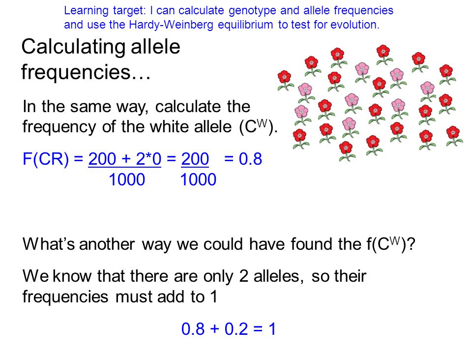 In the same way, calculate the frequency of the white allele (C W ). F(CR) = 200 + 2*0 = 200 = 0.8 1000 1000 Whats another way we could have found the