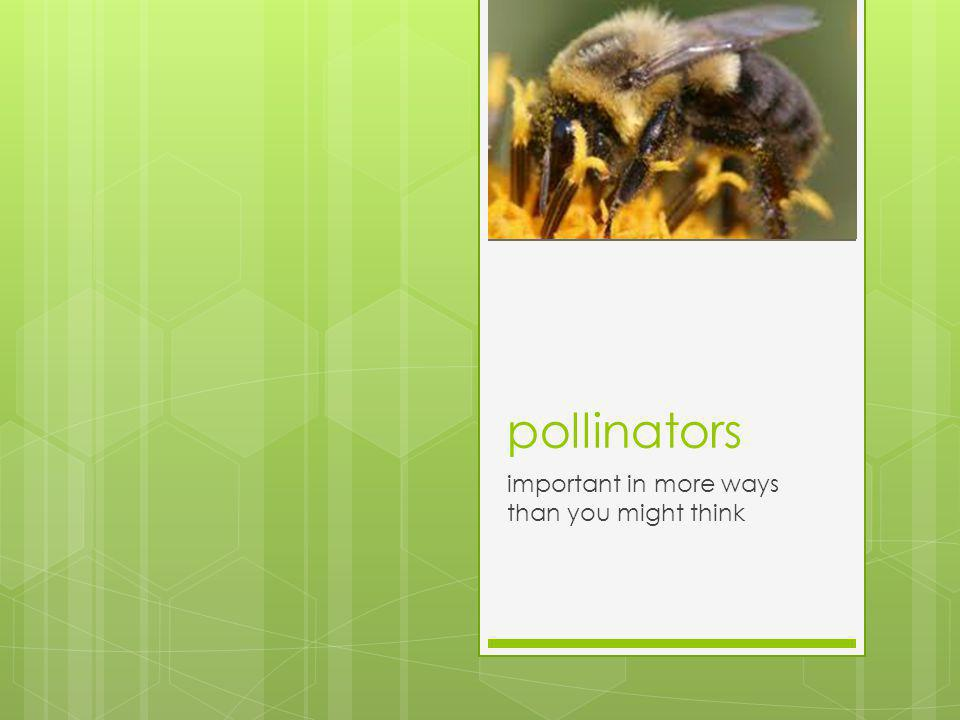 pollinators important in more ways than you might think