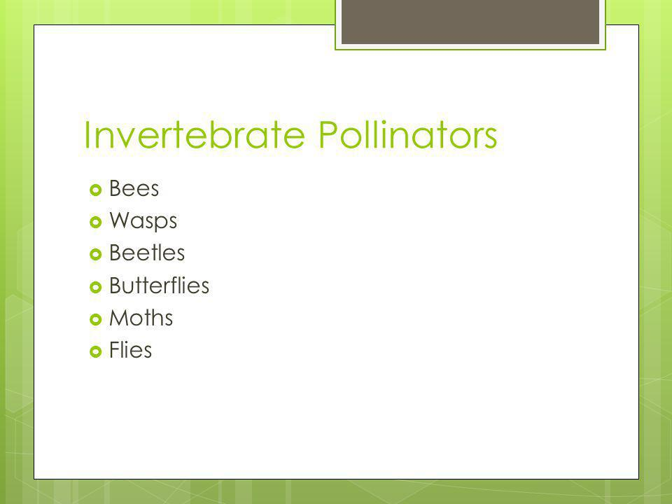 Invertebrate Pollinators Bees Wasps Beetles Butterflies Moths Flies
