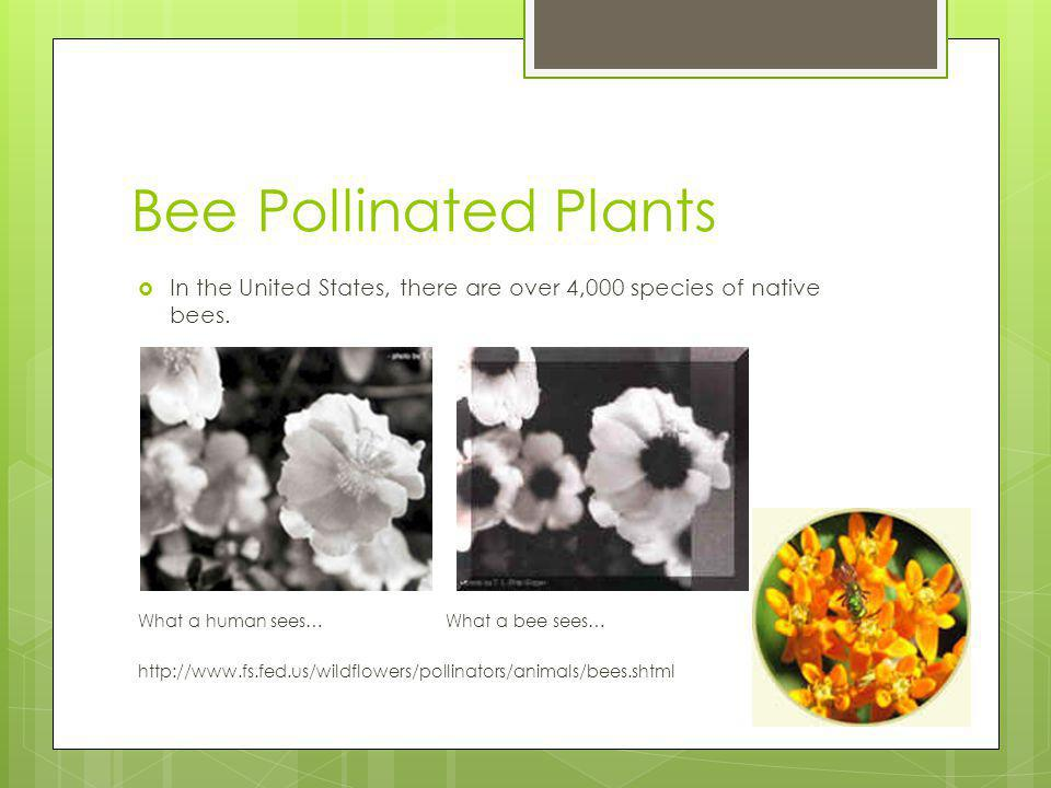 Bee Pollinated Plants In the United States, there are over 4,000 species of native bees.