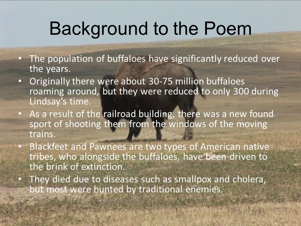 Background to the Poem The population of buffaloes have significantly reduced over the years. Originally there were about 30-75 million buffaloes roam