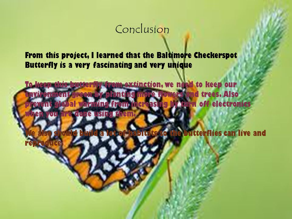 Conclusion From this project, I learned that the Baltimore Checkerspot Butterfly is a very fascinating and very unique To keep this butterfly from extinction, we need to keep our environment green by planting more flowers and trees.