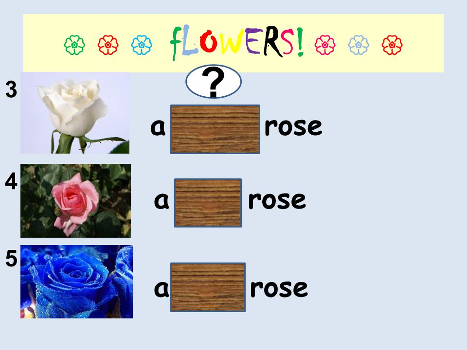 fLOWERS! 3 4 5 a white rose a pink rose a blue rose