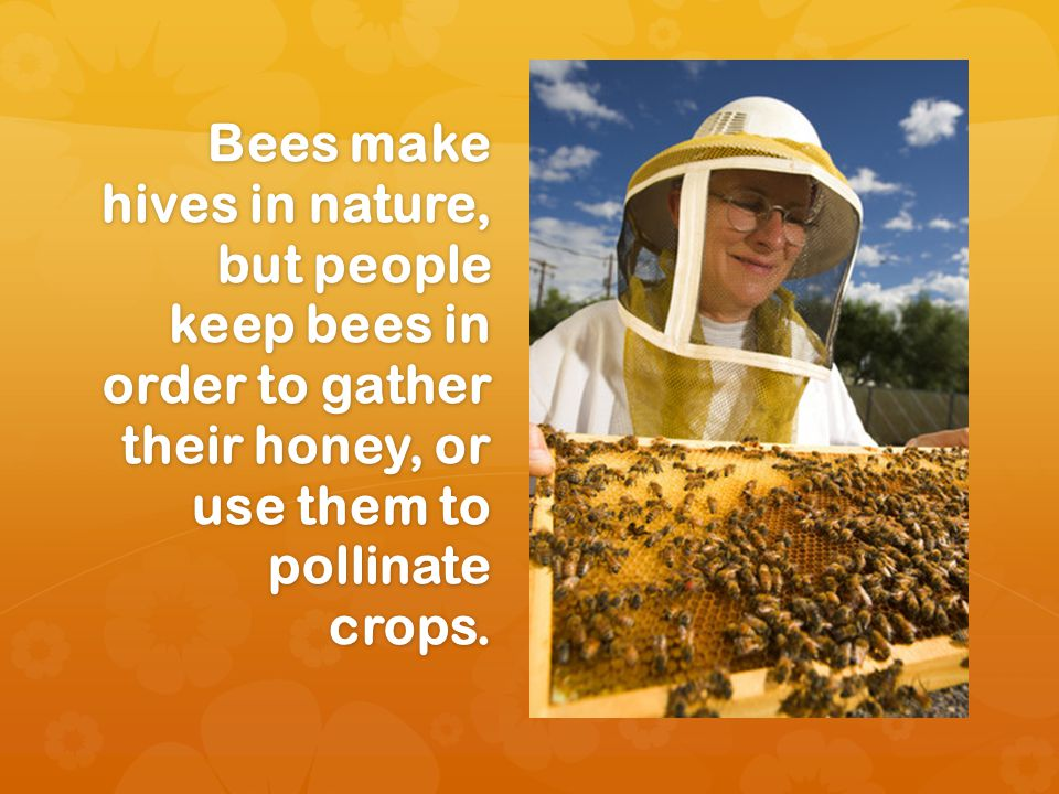 Bees make hives in nature, but people keep bees in order to gather their honey, or use them to pollinate crops.