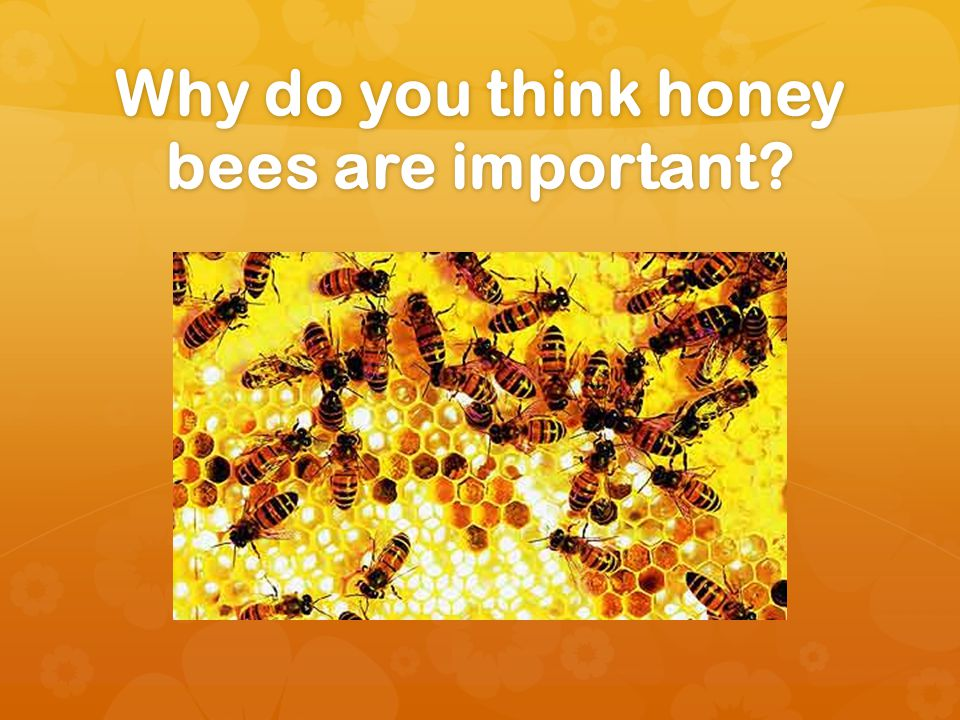 So to summarize, bees help us survive, because the help produce a lot of the food we eat!