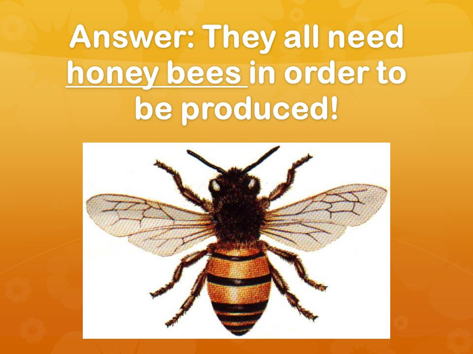 Videos About Colony Collapse Disorder https://www.youtube.com/watch?v=Zgc5w- xyQa0 https://www.youtube.com/watch?v=Zgc5w- xyQa0 https://www.youtube.com/watch?v=Zgc5w- xyQa0 https://www.youtube.com/watch?v=Zgc5w- xyQa0 https://www.youtube.com/watch?v=BRGrI4A QG70 https://www.youtube.com/watch?v=BRGrI4A QG70 https://www.youtube.com/watch?v=BRGrI4A QG70 https://www.youtube.com/watch?v=BRGrI4A QG70