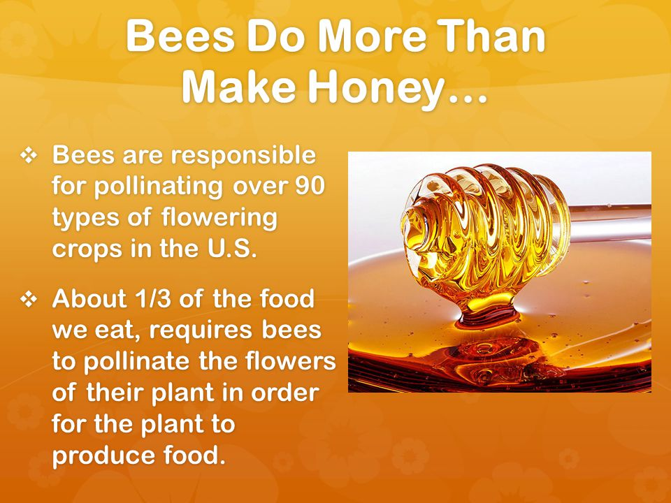 Bees Do More Than Make Honey… Bees are responsible for pollinating over 90 types of flowering crops in the U.S.