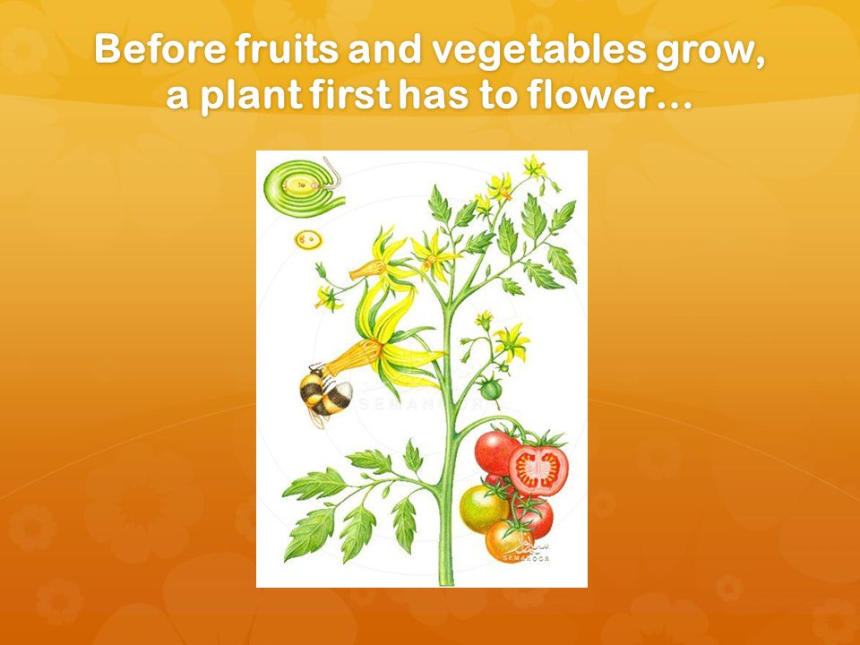 Before fruits and vegetables grow, a plant first has to flower…