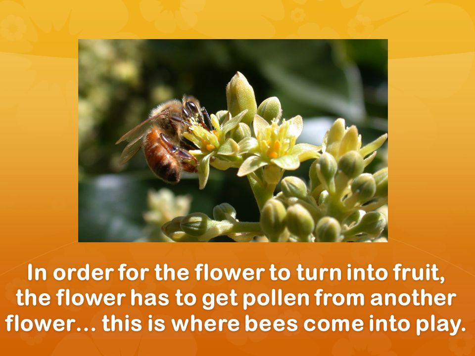Flowers that dont make fruit still need pollen from another flower to make seeds, which eventually make new plants.