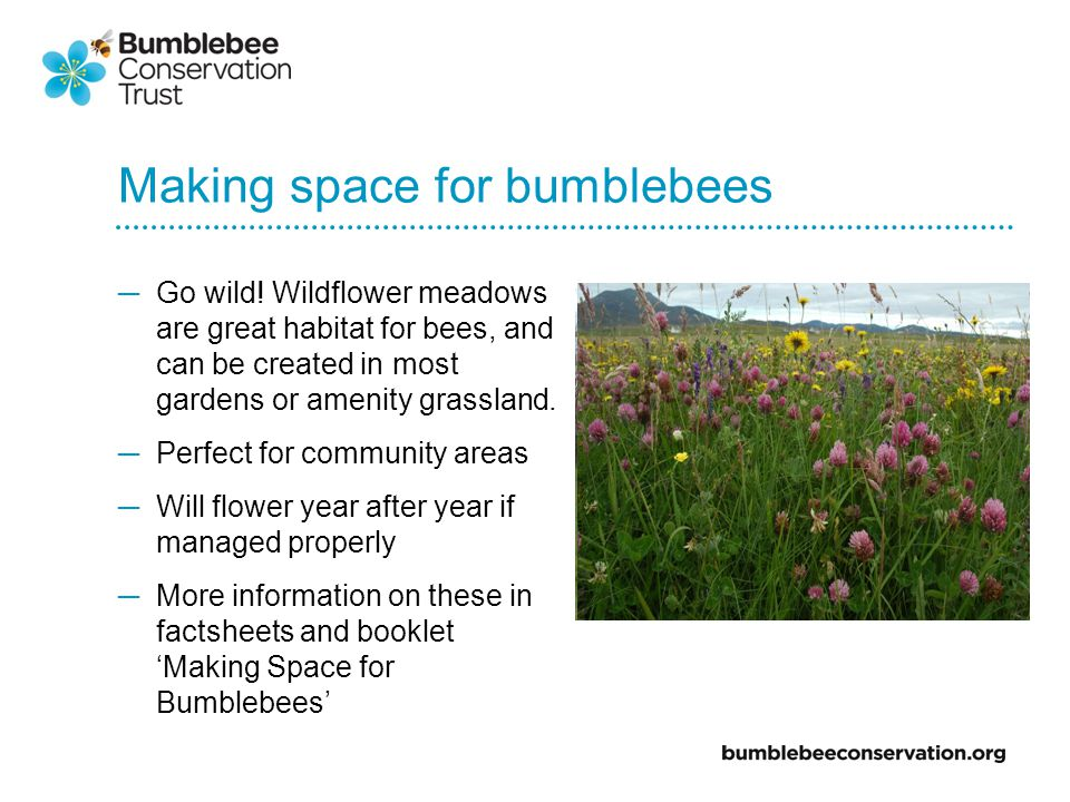 Making space for bumblebees Go wild.