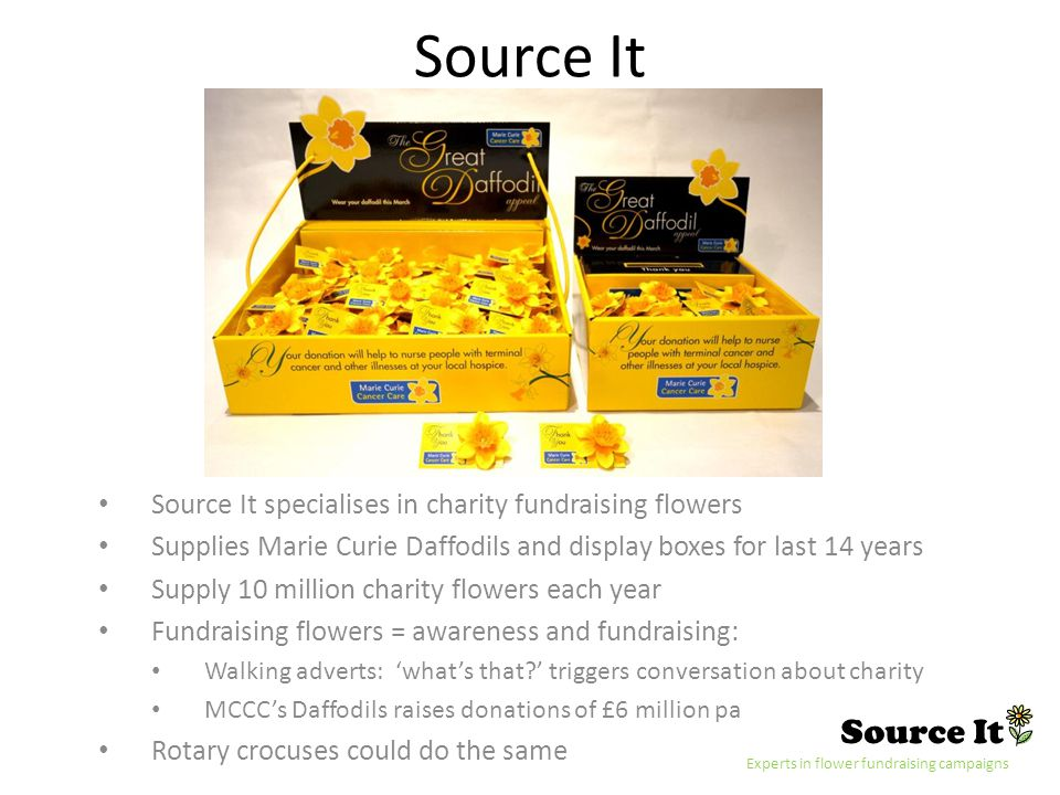 Source It Experts in flower fundraising campaigns Source It Source It specialises in charity fundraising flowers Supplies Marie Curie Daffodils and display boxes for last 14 years Supply 10 million charity flowers each year Fundraising flowers = awareness and fundraising: Walking adverts: whats that.