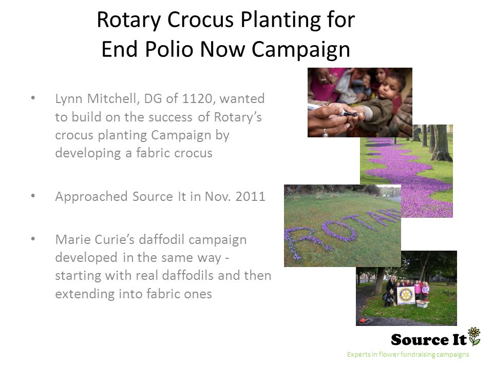 Source It Experts in flower fundraising campaigns Rotary Crocus Planting for End Polio Now Campaign Lynn Mitchell, DG of 1120, wanted to build on the success of Rotarys crocus planting Campaign by developing a fabric crocus Approached Source It in Nov.
