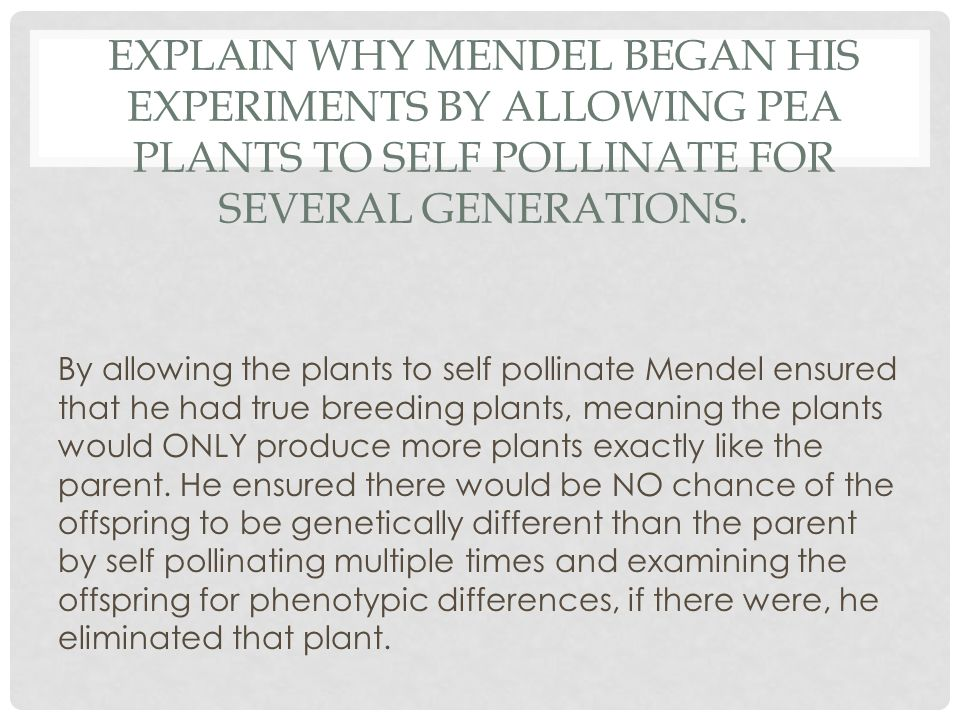 EXPLAIN WHY MENDEL BEGAN HIS EXPERIMENTS BY ALLOWING PEA PLANTS TO SELF POLLINATE FOR SEVERAL GENERATIONS. By allowing the plants to self pollinate Me