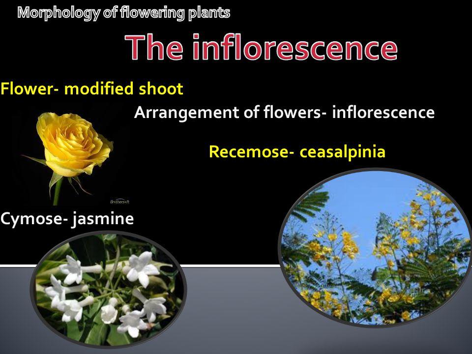 Flower- modified shoot Arrangement of flowers- inflorescence Recemose- ceasalpinia Cymose- jasmine