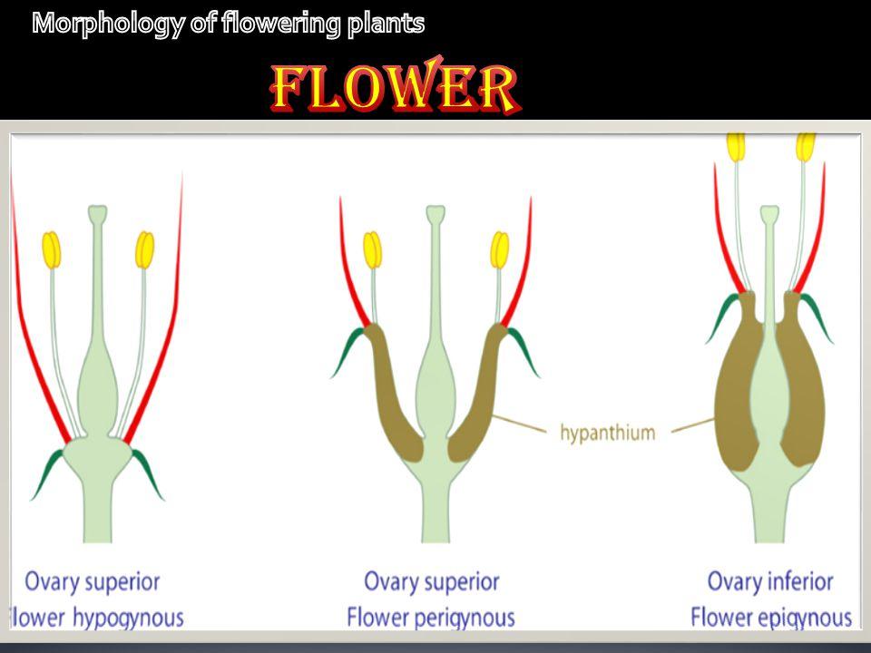 Perigynous- rose epigunous- sunflower