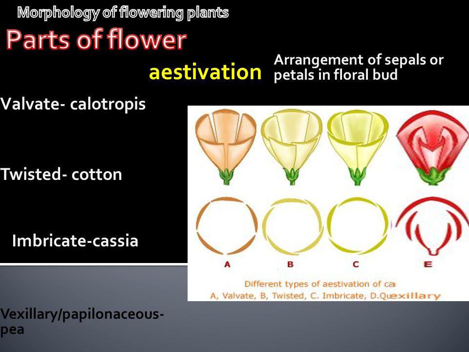 Arrangement of sepals or petals in floral bud aestivation Valvate- calotropis Twisted- cotton Imbricate-cassia Vexillary/papilonaceous- pea