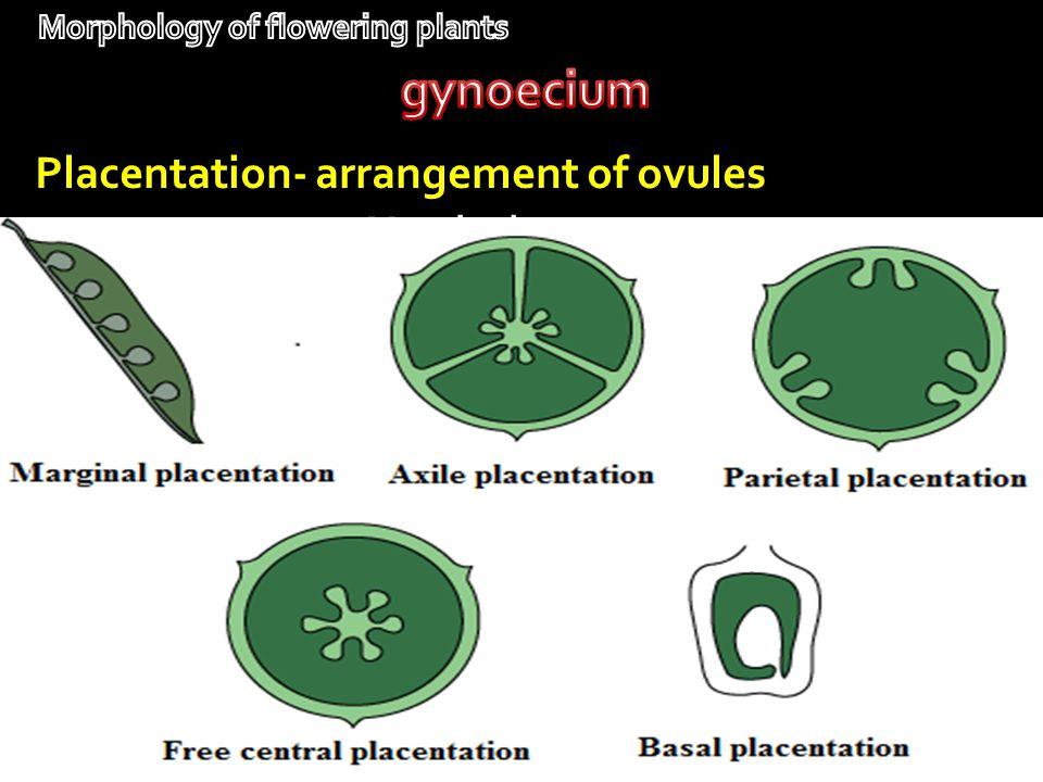 Marginal- pea Placentation- arrangement of ovules Parietal-mustard Free central- primroseBasal- sunflower